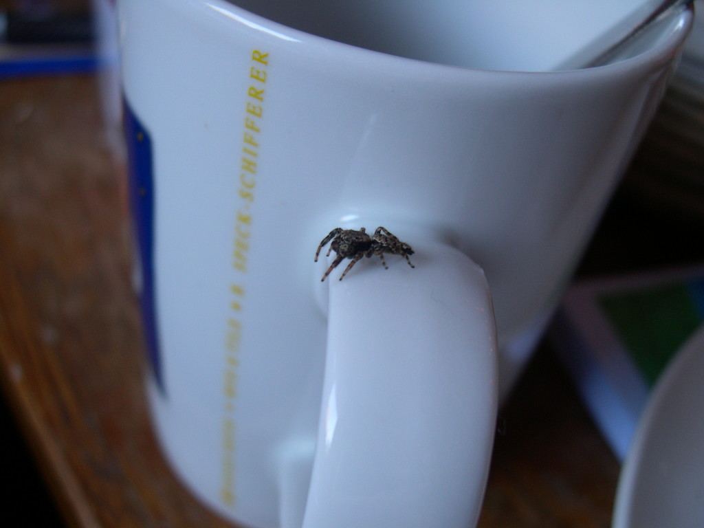 Itsy Bitsy Spider will Kaffee